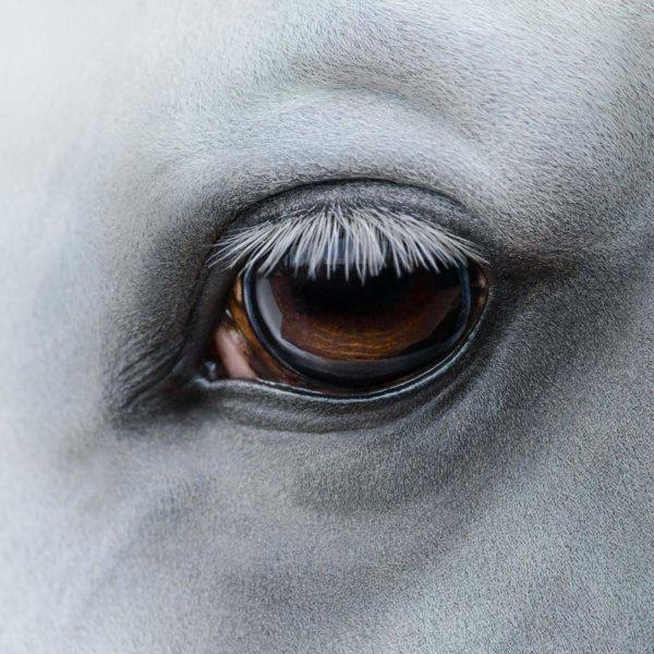 Augen auf beim Pferdekauf